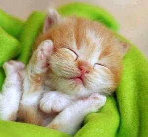 If You're Sleepy Raise Your Paws