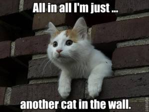 Im Just Another Cat in the Wall