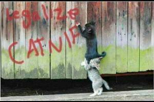 Legalize Catnip