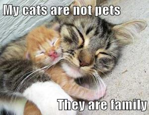 My Cats Are Family