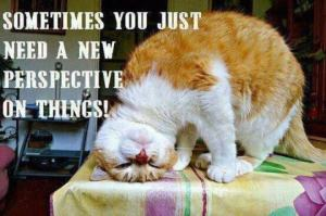 New Perspective!