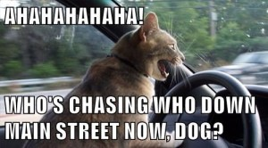 Chasing the Dog