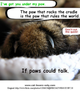 if-paws-could-talk
