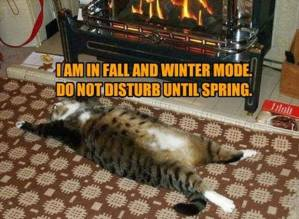fall-and-winter-mode