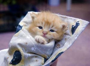 snuggly-kitten