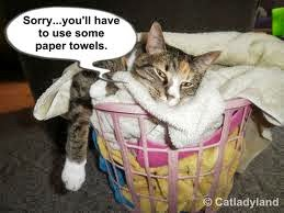 youll-have-to-use-some-paper-towels