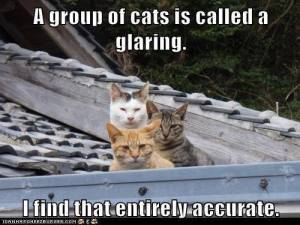 a-group-of-cats