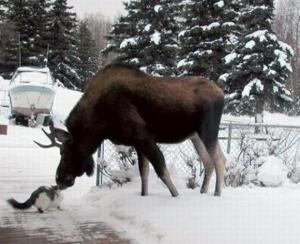 cat-and-moose