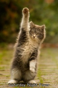 caturday-night-fever