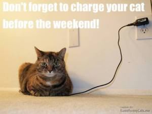 charge-your-cat