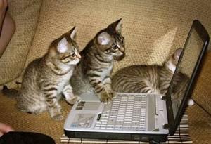 computer-cats