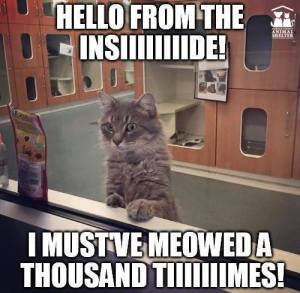 hello-from-the-inside