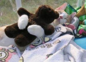 my-teddy