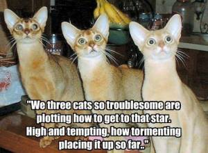 we-three-cats