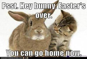 bunny-you-can-go-home-now