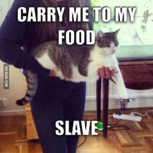 carry-me-to-my-food