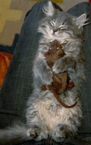cat-hugging-mouse