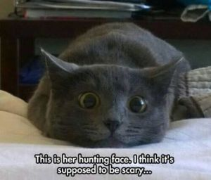 hunting-face