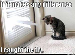 if-it-makes-any-difference-i-caught-the-fly