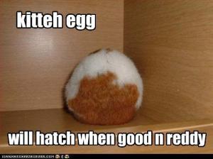 kitten-egg