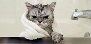 mad-cat