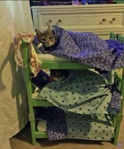 bunk-beds