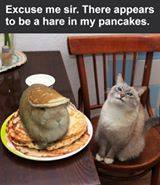 hare-in-my-pancakes